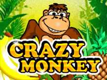 Crazy Monkey в казино на деньги